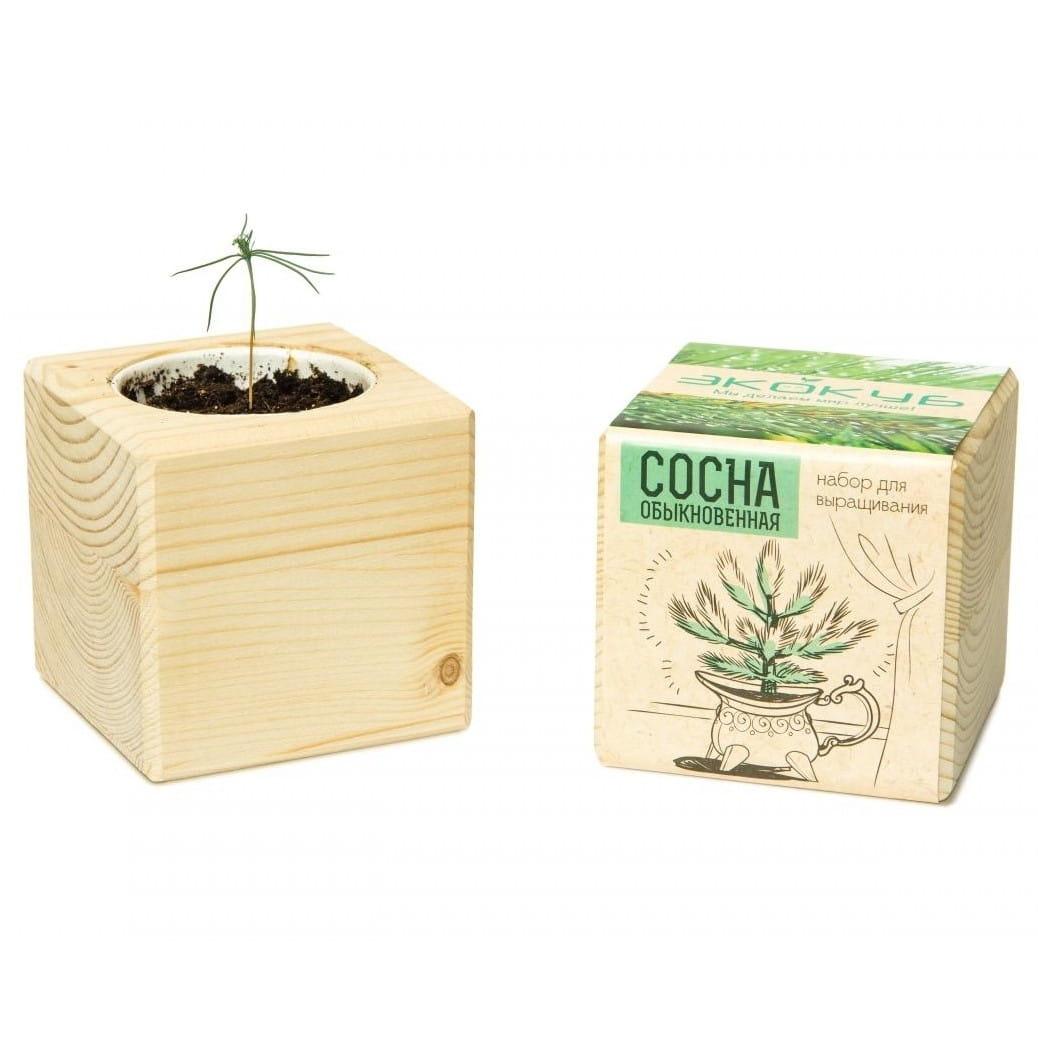 Набор для выращивания Экокуб Сосна