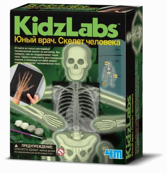 Игровый набор 4M Юный врач - Скелет человека