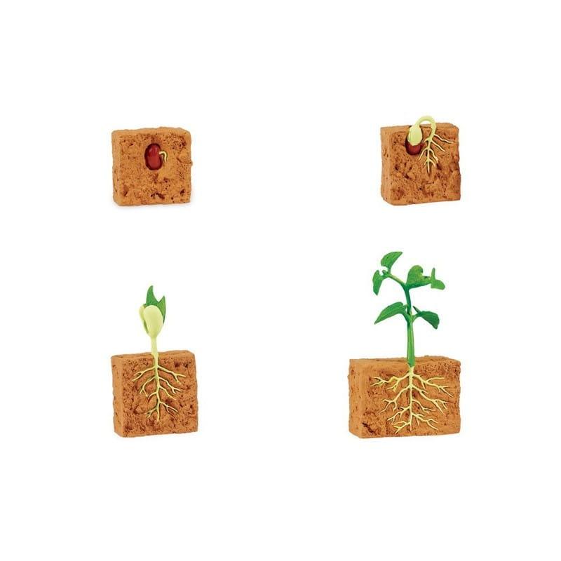 Набор Safari 662416 Жизненный цикл зеленой фасоли