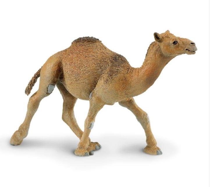 Фигурка Safari 222429 Одногорбый верблюд